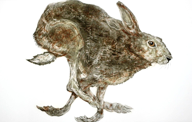 Hare we go again resize