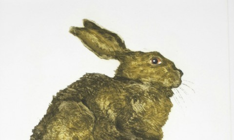 Bouncy Hare resize