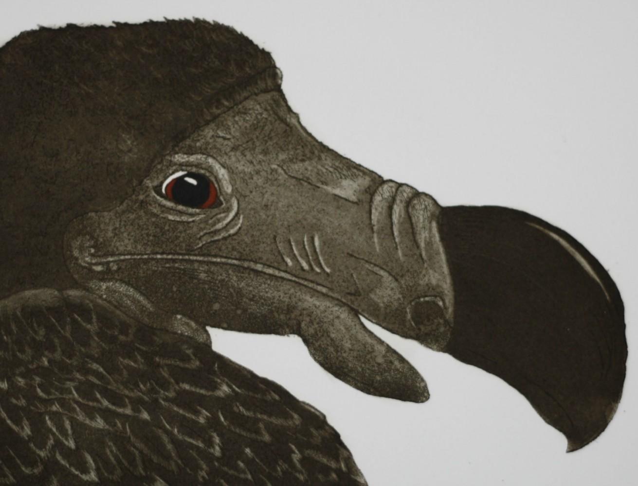 Portrait of a Dodo resize