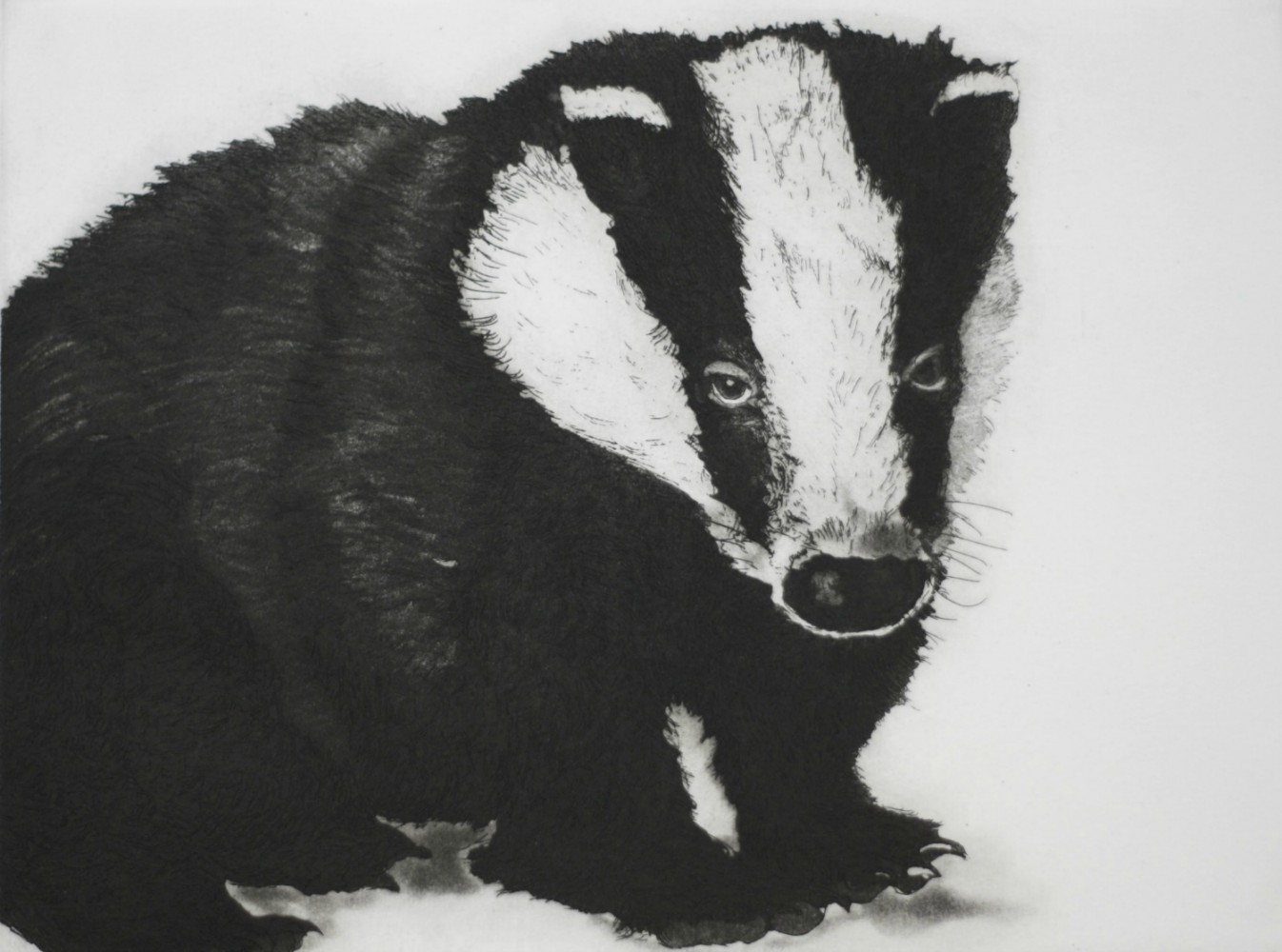 Young Mr. Badger resize