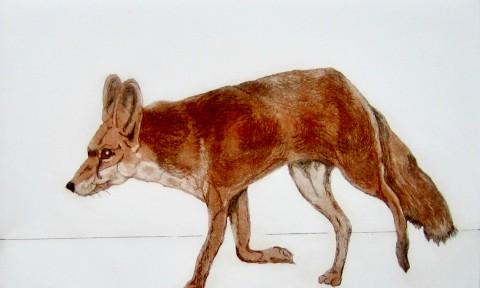 Foxy Fox resize
