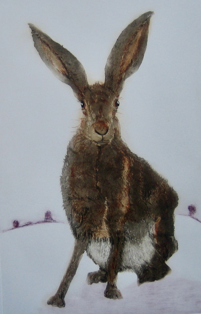 Hare Say (1)